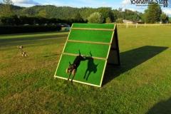 Výcvik psů LVT