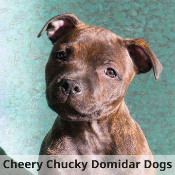 Cheery Chucky Domidar Dogs