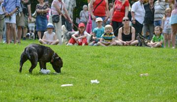Výcvik psů, Praha - východ
