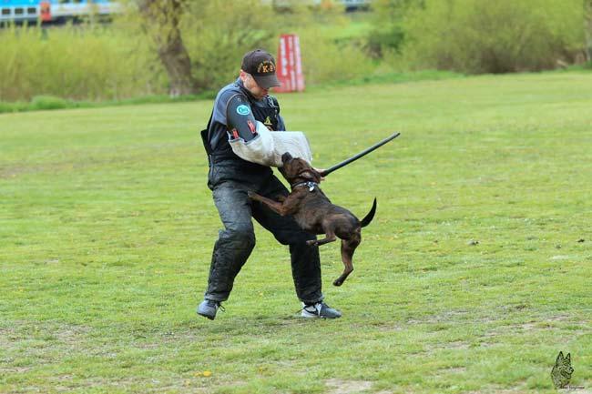 Výcvik psa