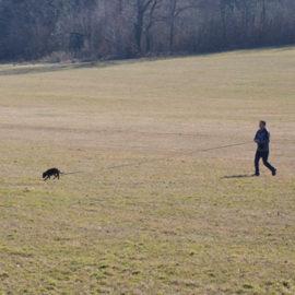hlídání a výcvik psů